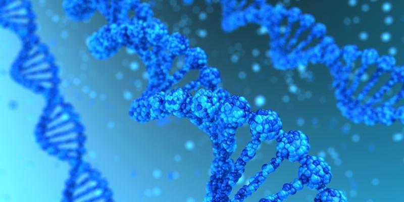 Badanie wariantu C677T/A1298C genu MTHFR