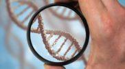 Badanie polimorfizmu genu <em>MTHFR</em> – cena, korzyści, przydatne informacje